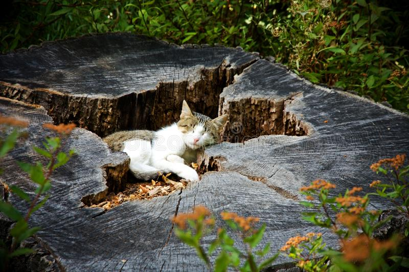 Cat resting. On a tree stump royalty free stock photography