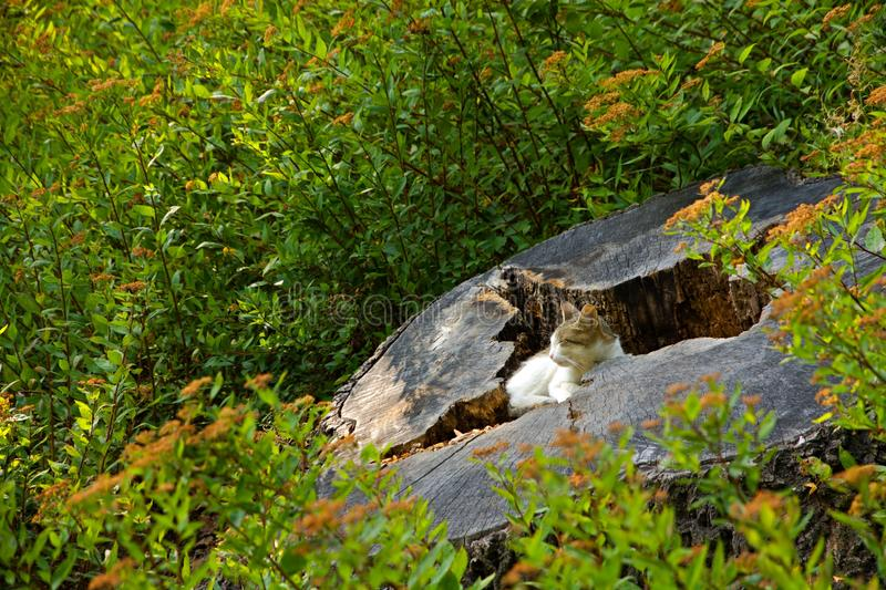 Cat resting. On a tree stump stock photography