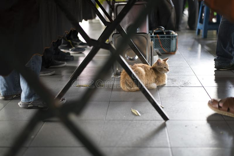 Cat resting under the table at a busy fresh market stock image