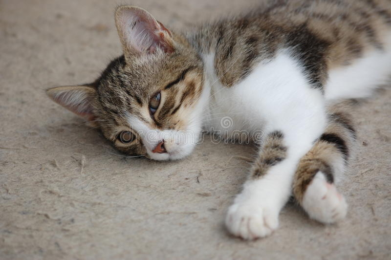 Cat resting stock image