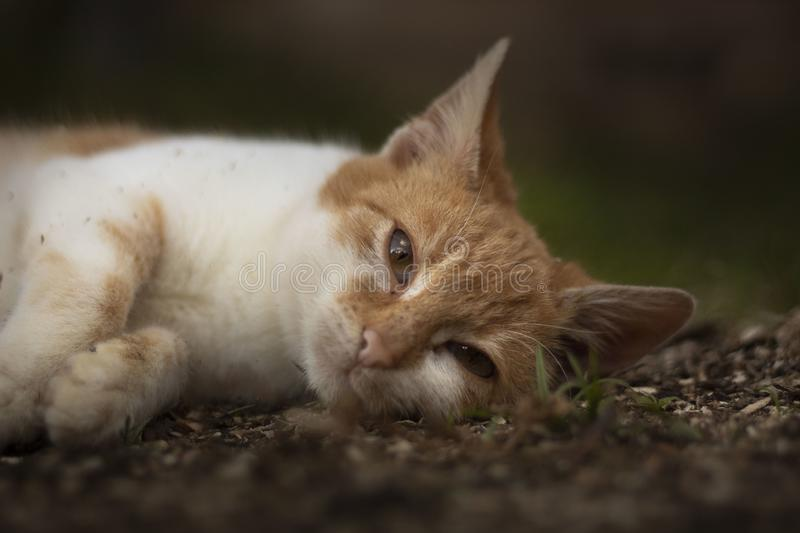 Cat resting in the yard royalty free stock image