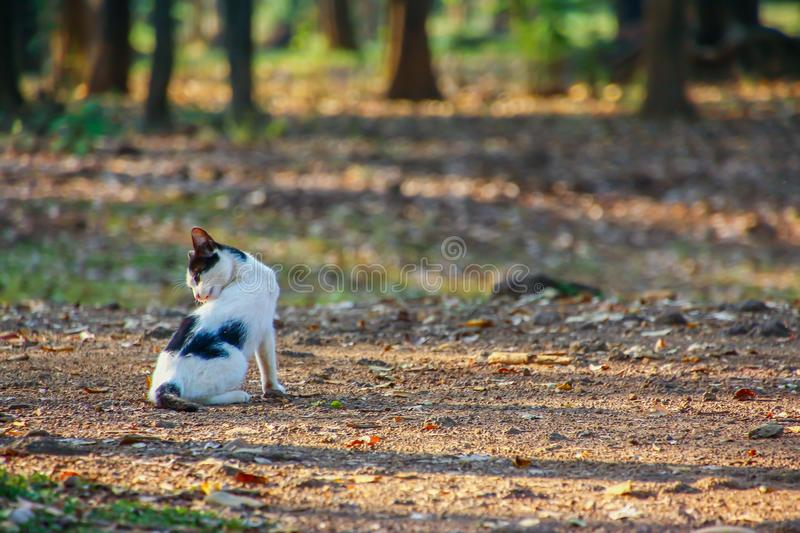 Cat rests under a shade in a park. Cat rests under a shade in a public park royalty free stock photos