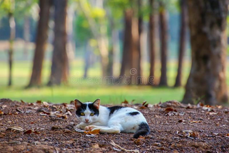 Cat rests under a shade in a park. Cat rests under a shade in a public park stock photo