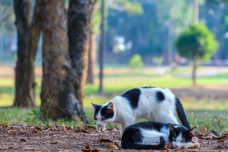 Cat rests under a shade in a park. Cat rests under a shade in a public park royalty free stock images