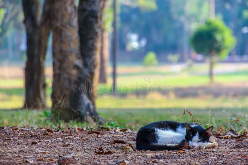 Cat rests under a shade in a park. Cat rests under a shade in a public park royalty free stock photo