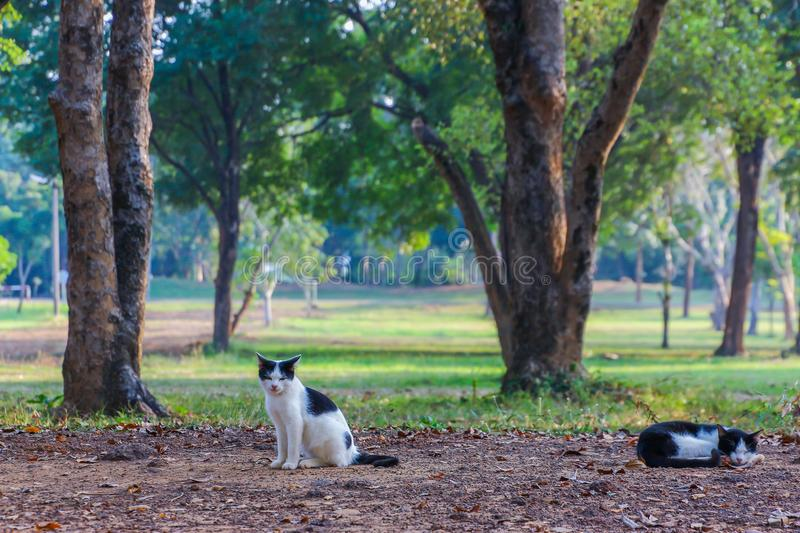 Cat rests under a shade in a park. Cat rests under a shade in a public park stock images
