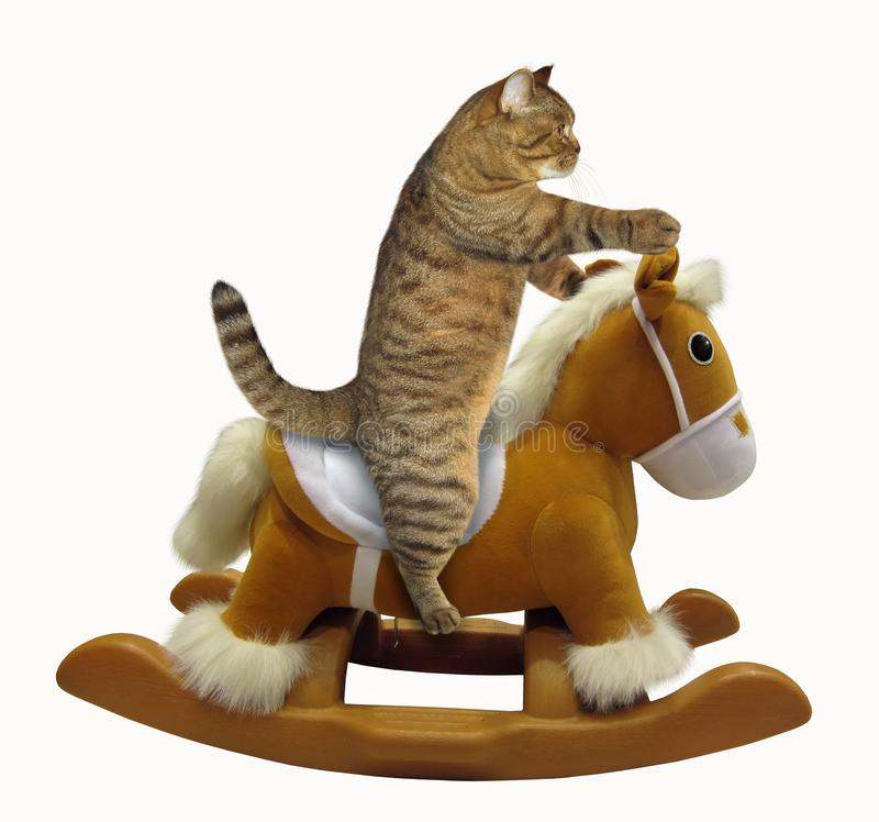 Cat rides a toy horse. The cat is riding the a soft toy rocking horse. White background royalty free stock image