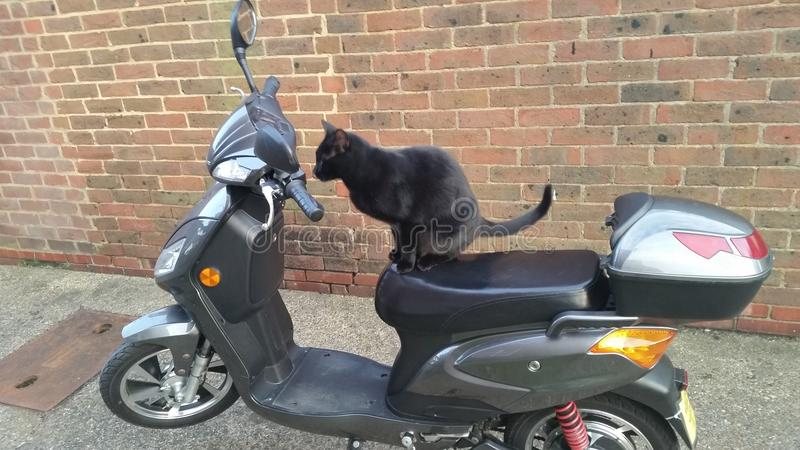 Cat riding a scooter royalty free stock images