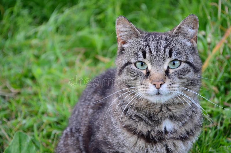 The cat by the river sits on the grass royalty free stock image