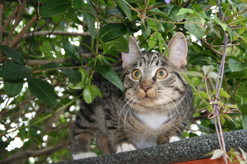 Download Cat On Roof stock image. Image of tabby, whiskers, undergrowth - 104657