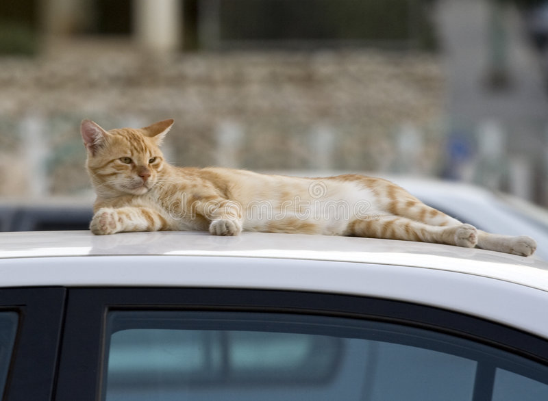 Cat on roof stock image