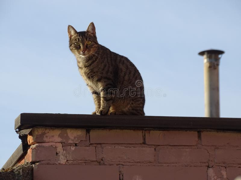 Cat on a roof and brick wall. In a blue sky with chimney royalty free stock image