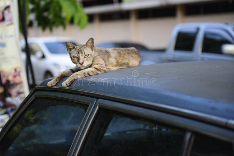 The cat royalty free stock photos