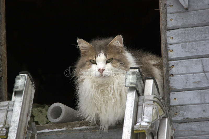 Cat on the roof royalty free stock images