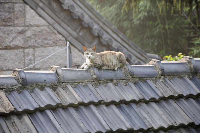 Cat on a Roof stock photography