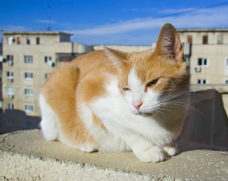Cat on the rooftop stock photos