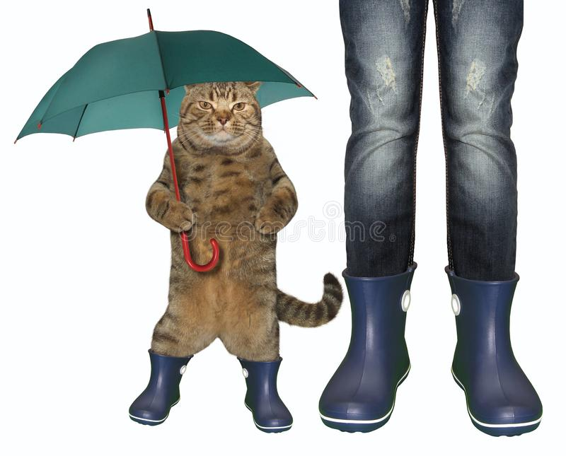 Cat in rubber boots 2 stock photo