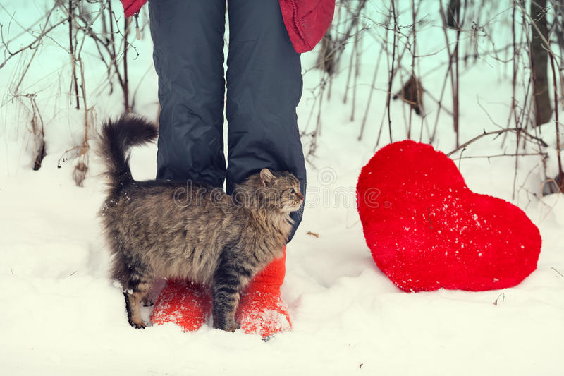 Cat rubbing against female legs. In the snow stock images