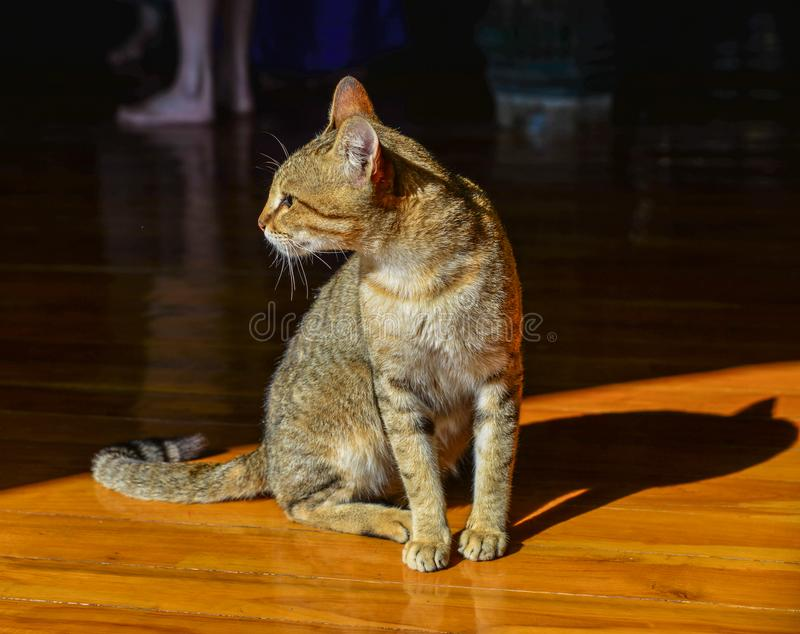 A cat at rural house. In Inle Lake, Myanmar stock photos