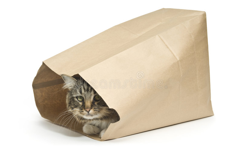 The cat's in the Bag. Tabby cat inside a paper bag illustrating a guarded secret from the saying the cat's in the bag