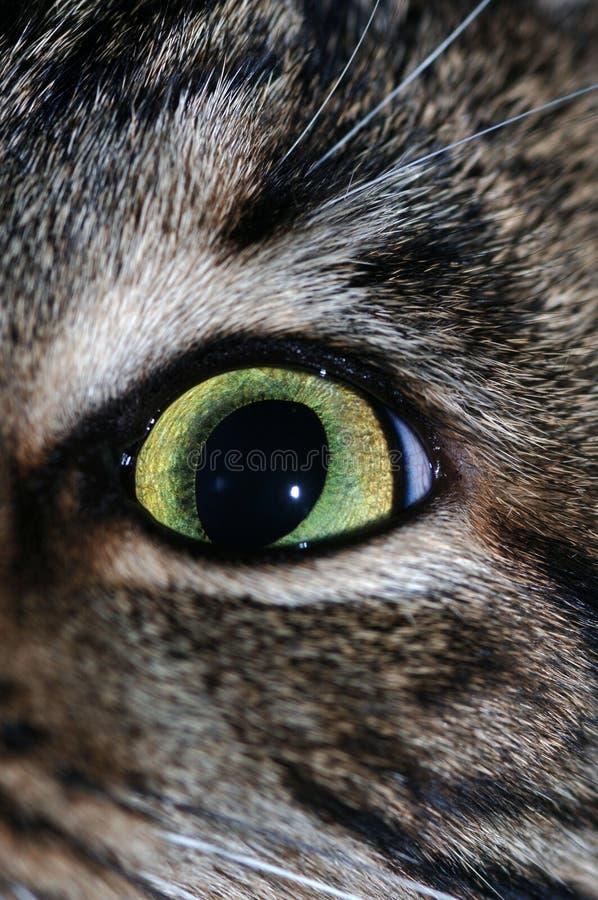 Cat's eye stock image