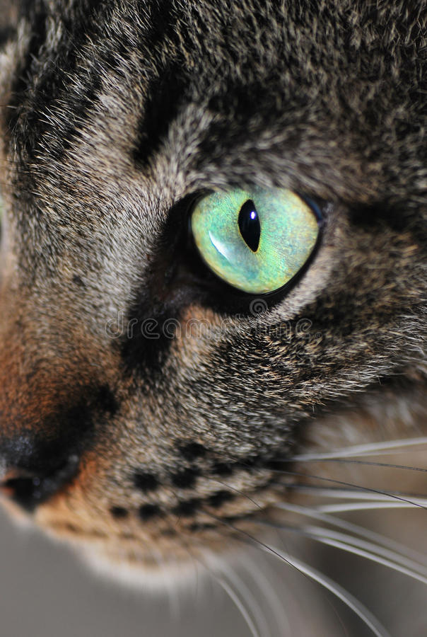 Cat's Eye royalty free stock photography