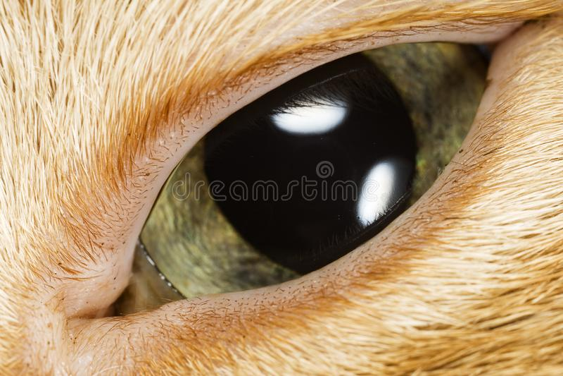 Cat's Eye Close-Up Macro royalty free stock photo