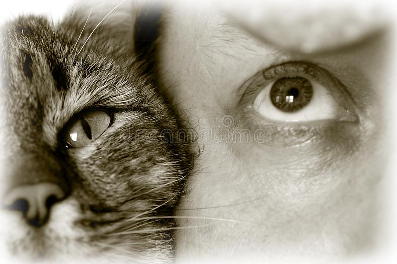 The cat`s eye and man`s together look forward royalty free stock photo