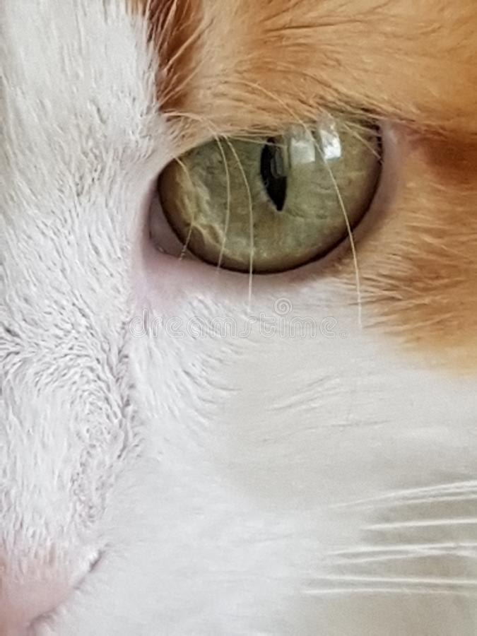 Cat`s eye, mustache, nose eyebrows. The floor of the muzzle of a cat. Portrait of a fluffy red-white cat, closeup. Cat`s eye, mustache, nose eyebrows royalty free stock photography