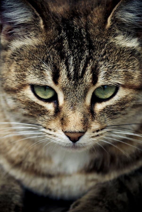 Cat's Eyes stock photography