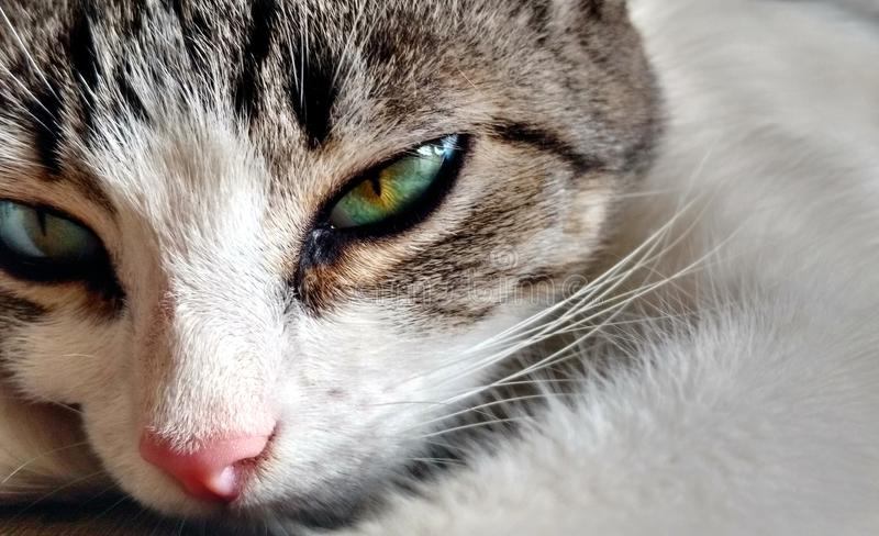 Cat`s eyes fixation. A unique time to take a great cat`s moment, it was hard but very rewarding royalty free stock image