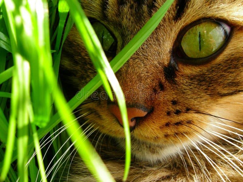 Cat's eyes in the garden stock image