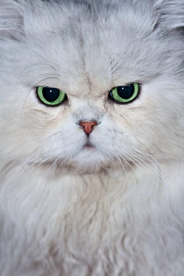 Cat S Face Stock Photo