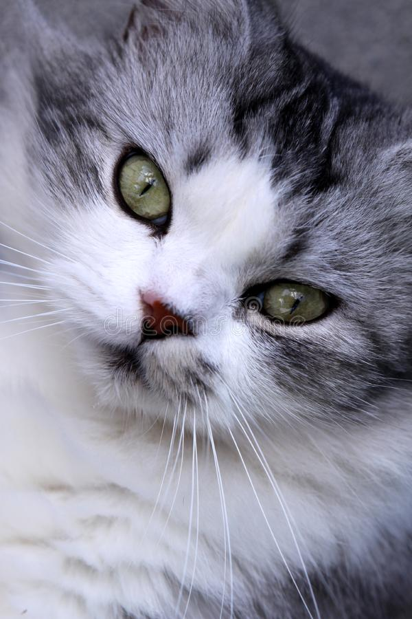 Cat's face stock images