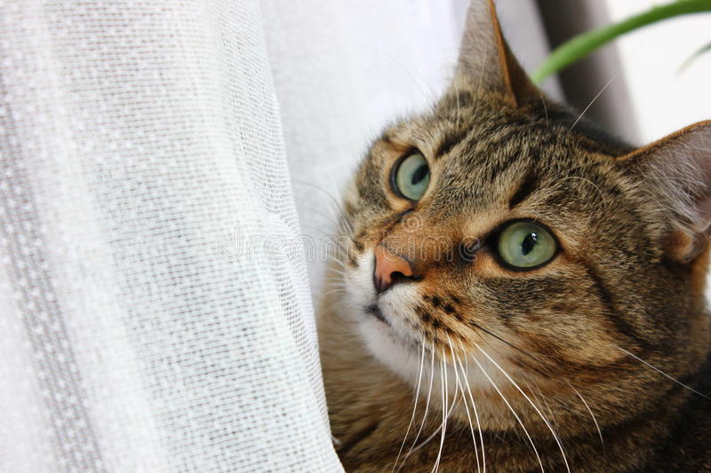 Cat's face royalty free stock images
