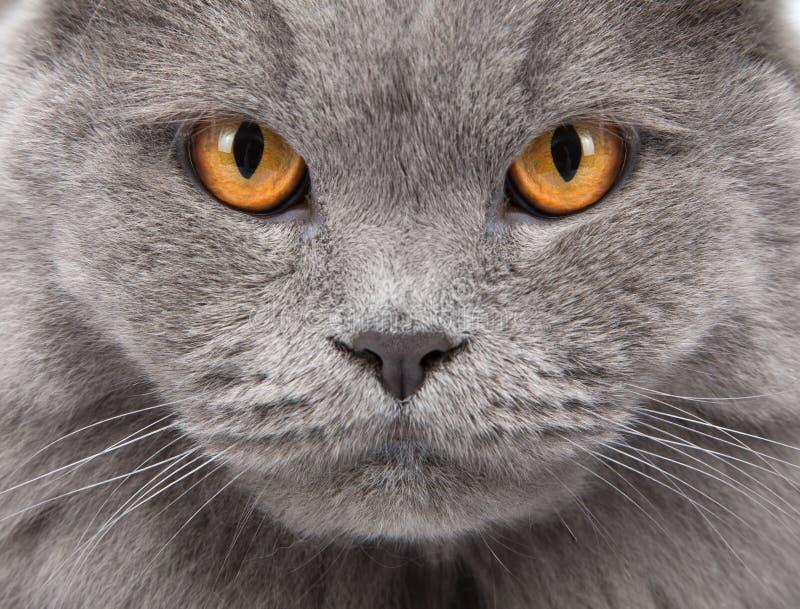 Download Cat's Face Closeup Stock Images - Image: 16793514