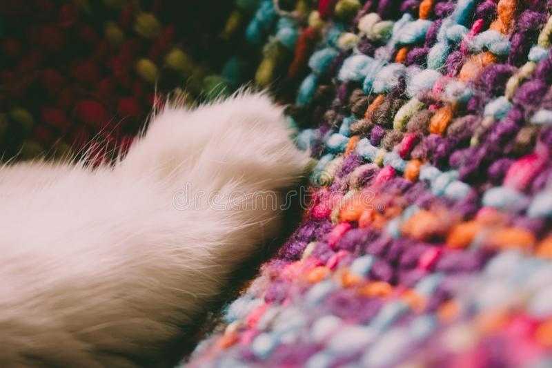 Cat`s feet. Paws of a white cat. Turkish Angora royalty free stock photos