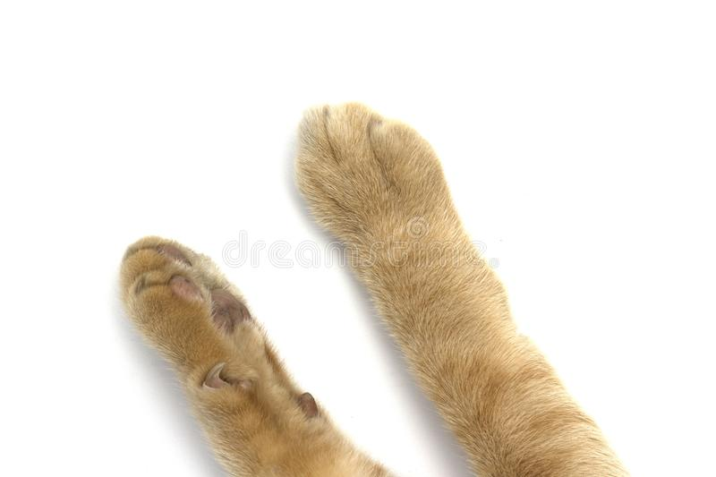 Cat`s feet white background. Cat`s feet on white background stock images