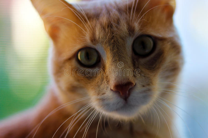 Cat's Glance royalty free stock photography