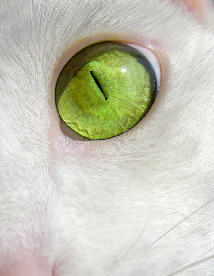Download Cat's green eye stock photo. Image of vision, face, green - 2370516