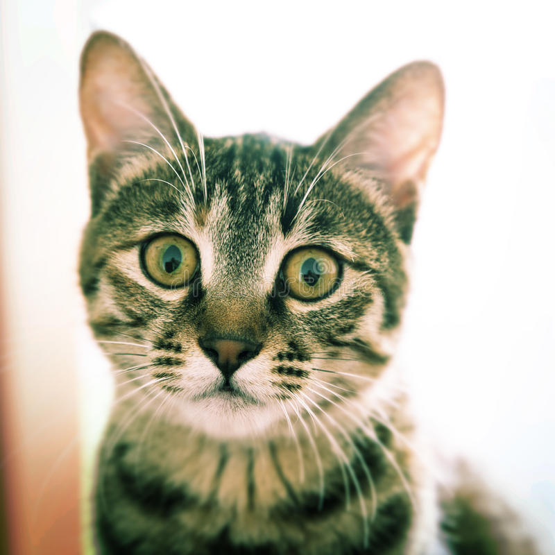 Free Cat S Looking At You Stock Photography - 27724832