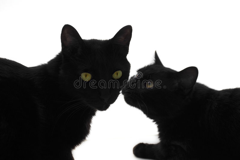 Cat's love royalty free stock images