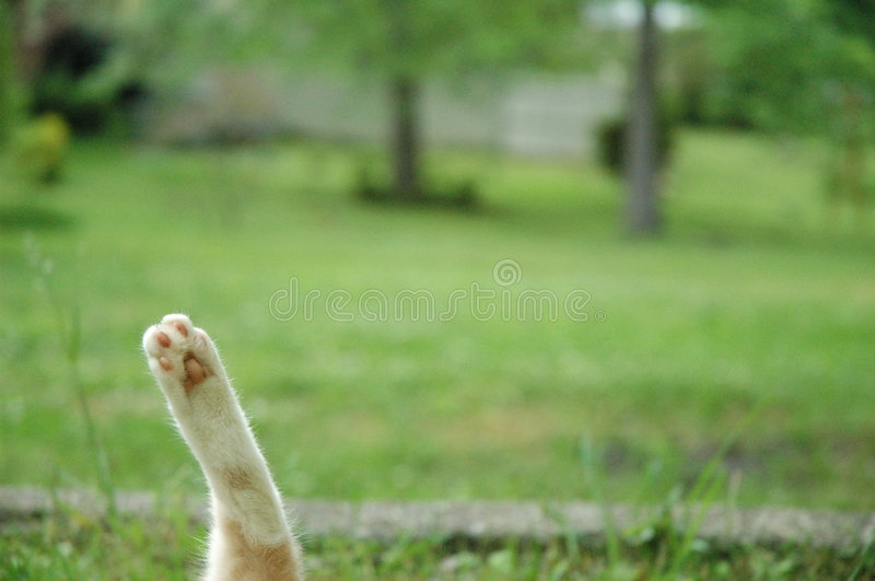 Download Cat's paw stock image. Image of yard, alone, green, trees - 2932809