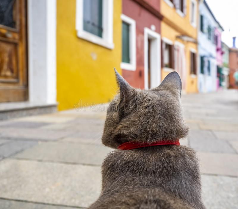 Cat`s Point of View. Sitting cat in the colorful village of Burano, Italy stock photos