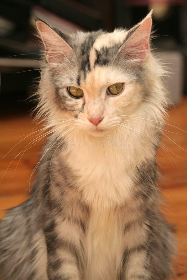 Download Cat's portrait stock image. Image of milk, pussycat, animals - 2318495