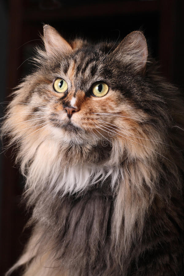 Cat's portrait. royalty free stock photography