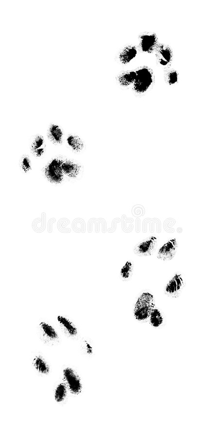 Download Cat's Real Tracks Stock Image - Image: 1377231
