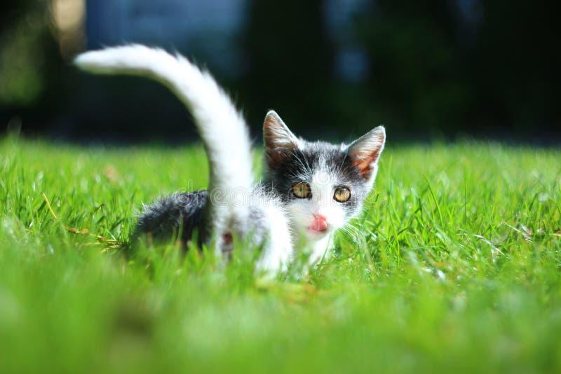 Cat's tongue stock photos