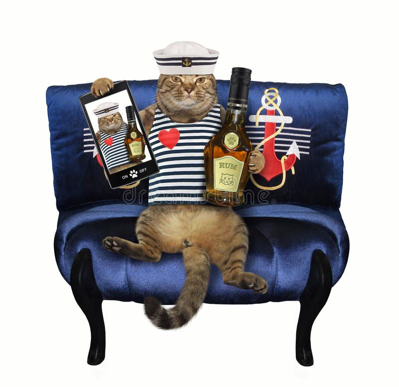 Cat with rum sitting on a blue couch stock images