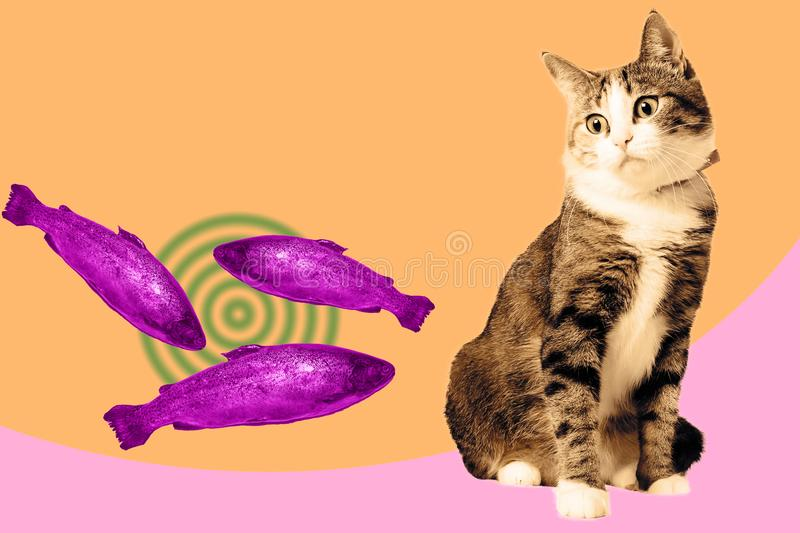 Cat and salmon collage, pop art concept design. Hypnotic vibrant minimal background.  stock photography